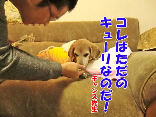 チャンスとティアラ+ココ-20121024-7-500.jpg