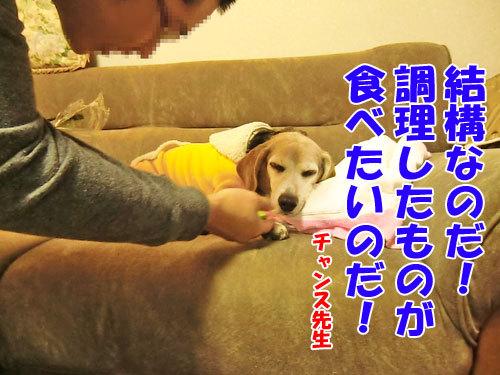 チャンスとティアラ+ココ-20121024-8-500.jpg