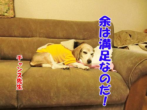 チャンスとティアラ+ココ-20121024-9-500.jpg