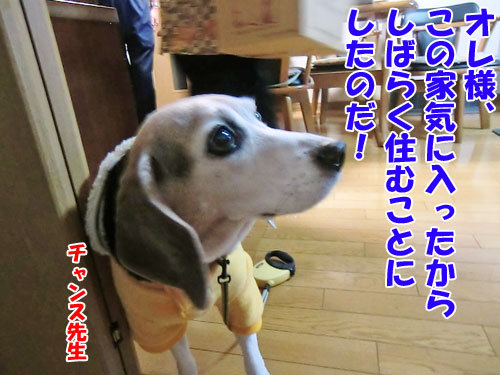 チャンスとティアラ+ココ-20121024-10-500.jpg