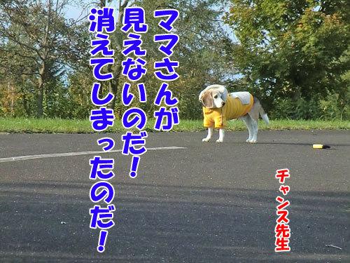 チャンスとティアラ+ココ-20121025-4-500.jpg