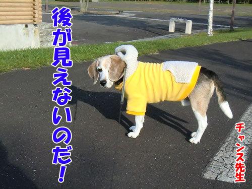 チャンスとティアラ+ココ-20121025-5-500.jpg
