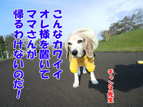 チャンスとティアラ+ココ-20121025-7-500.jpg