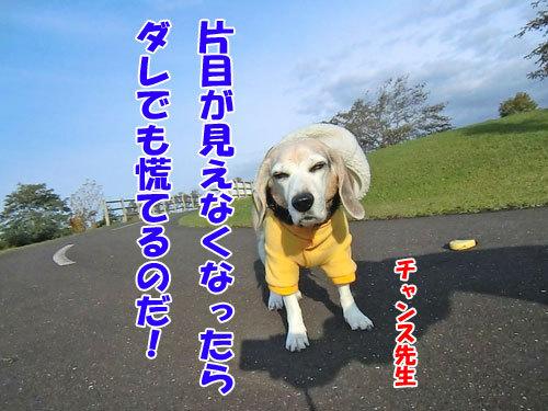 チャンスとティアラ+ココ-20121025-8-500.jpg