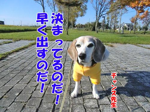 チャンスとティアラ+ココ-20121026-5-500.jpg