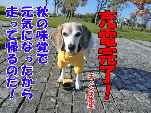 チャンスとティアラ+ココ-20121026-7-500.jpg