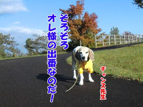 チャンスとティアラ+ココ-20121027-5-500.JPG