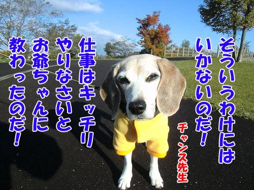 チャンスとティアラ+ココ-20121027-6-500.JPG