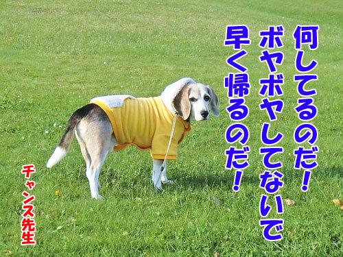チャンスとティアラ+ココ-20121027-9-500.JPG