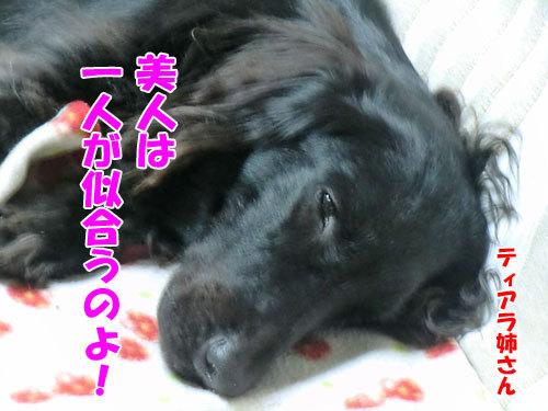 $チャンスとティアラ+ココ-20121028-4-500.jpg