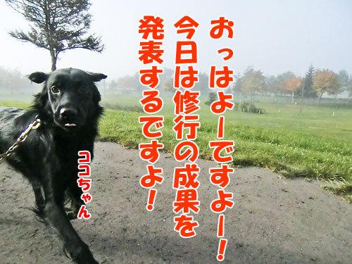 チャンスとティアラ+ココ-20121029-3-500.jpg