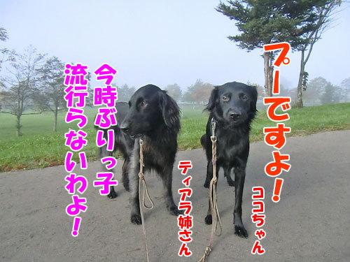 チャンスとティアラ+ココ-20121029-8-500.jpg