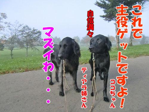 チャンスとティアラ+ココ-20121029-9-500.jpg