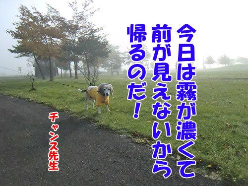 チャンスとティアラ+ココ-20121029-10-500.jpg