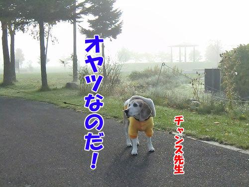 チャンスとティアラ+ココ-20121029-11-500.jpg