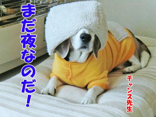 チャンスとティアラ+ココ-20121030-1-500.jpg