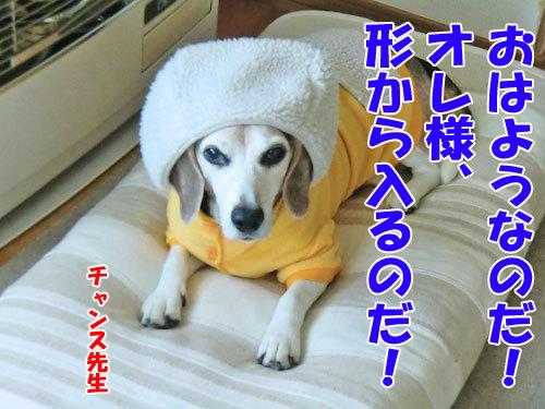 チャンスとティアラ+ココ-20121030-2-500.jpg
