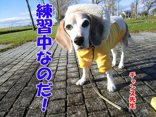 チャンスとティアラ+ココ-20121030-4-500.jpg