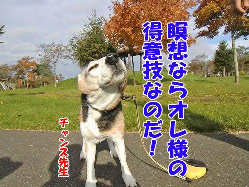 チャンスとティアラ+ココ-20121031-3-500.jpg
