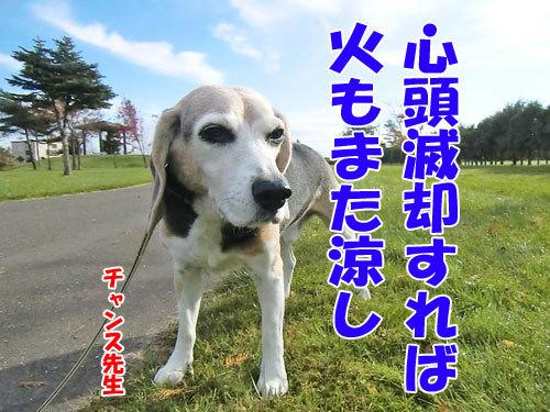 チャンスとティアラ+ココ-20121031-4-500.jpg