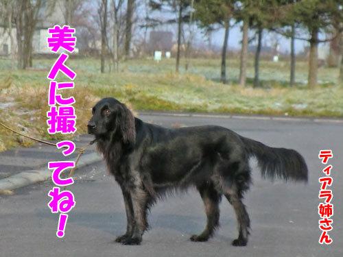 チャンスとティアラ+ココ-20121121-2-500.jpg