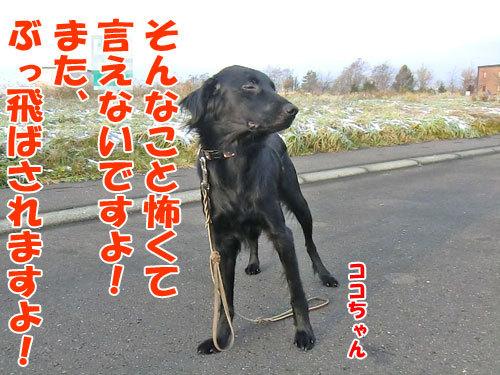 チャンスとティアラ+ココ-20121121-4-500.jpg
