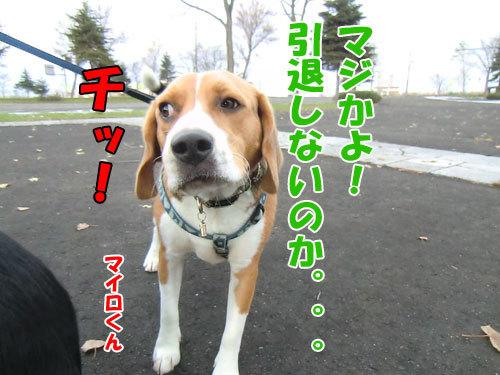 チャンスとティアラ+ココ-20121121-6-500.jpg