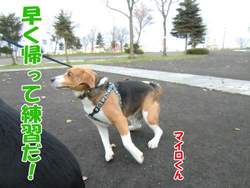 チャンスとティアラ+ココ-20121121-7-500.jpg