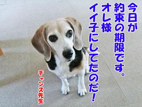 チャンスとティアラ+ココ-20121121-8-500.jpg