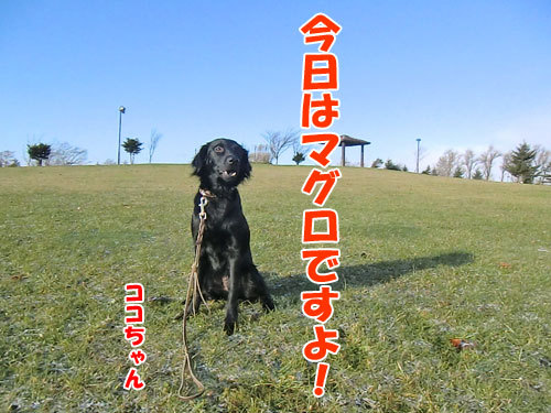 チャンスとティアラ+ココ-20121122-2-500.jpg