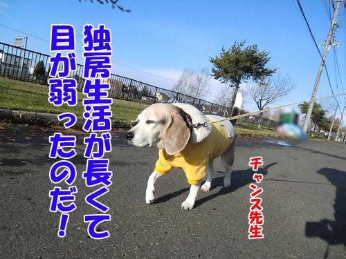 チャンスとティアラ+ココ-20121122-7-500.jpg