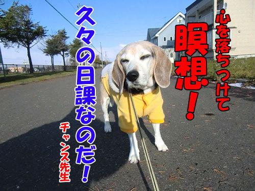 チャンスとティアラ+ココ-20121122-8-500.jpg