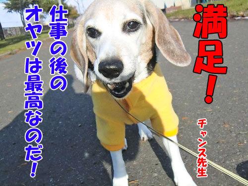 チャンスとティアラ+ココ-20121122-11-500.jpg