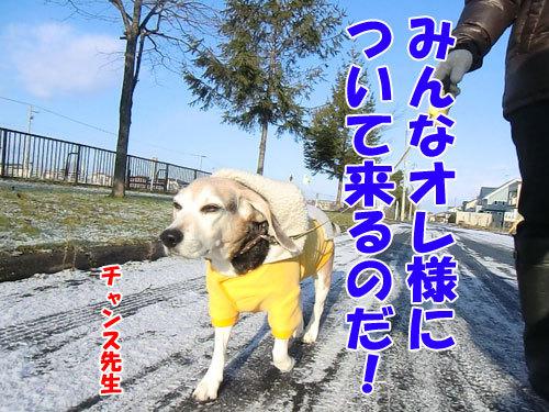 チャンスとティアラ+ココ-20121123-1-500.jpg