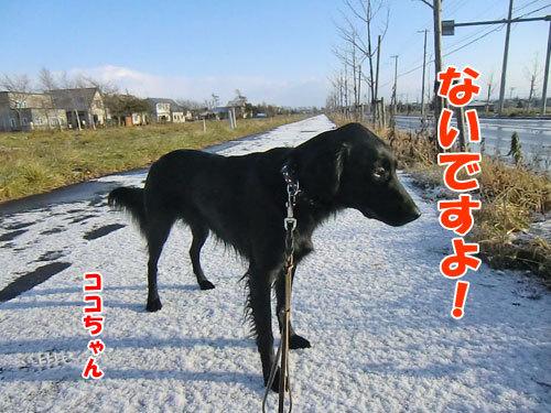 チャンスとティアラ+ココ-20121123-2-500.jpg