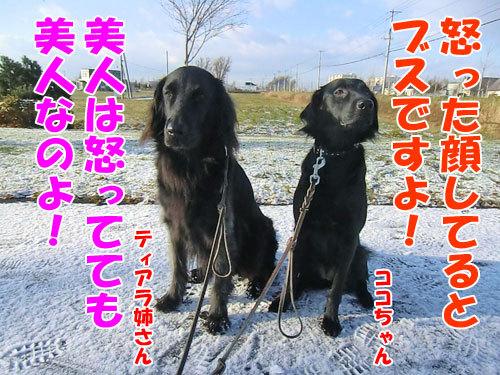 チャンスとティアラ+ココ-20121123-6-500.jpg