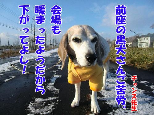 チャンスとティアラ+ココ-20121123-7-500.jpg