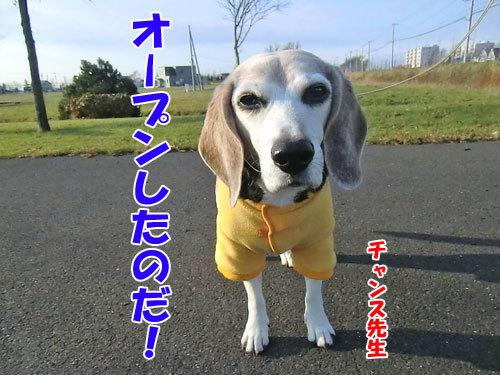 チャンスとティアラ+ココ-20121124-1-500.jpg