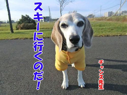 チャンスとティアラ+ココ-20121124-2-500.jpg