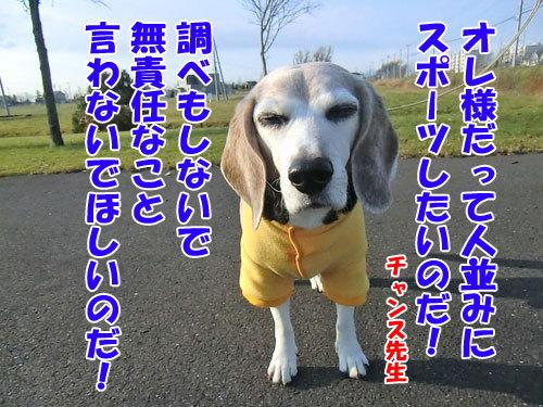 チャンスとティアラ+ココ-20121124-3-500.jpg