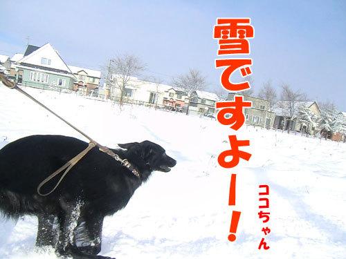 チャンスとティアラ+ココ-20121125-2-500.jpg