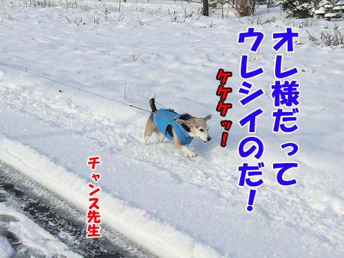 チャンスとティアラ+ココ-20121125-3-500.jpg