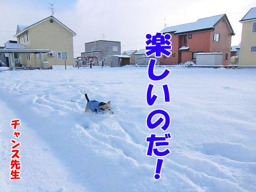 チャンスとティアラ+ココ-20121125-4-500.jpg