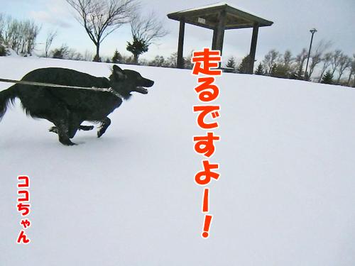チャンスとティアラ+ココ-20121126-2-500.jpg