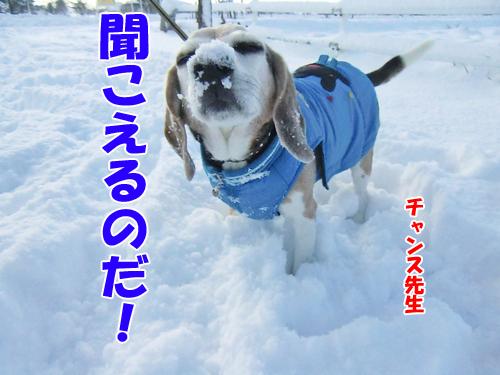 チャンスとティアラ+ココ-20121126-4-500.jpg