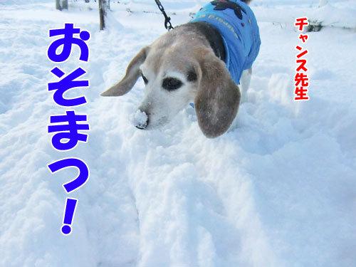 チャンスとティアラ+ココ-20121126-7-500.jpg