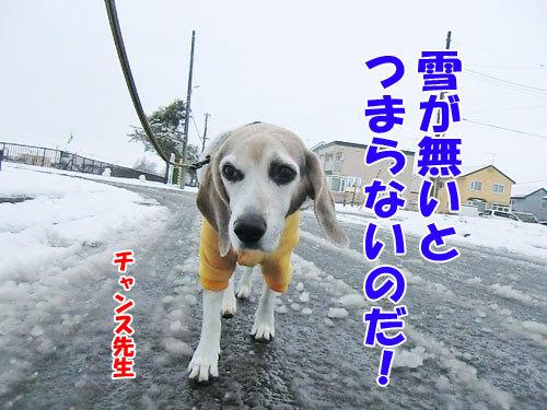 チャンスとティアラ+ココ-20121127-1-500.jpg