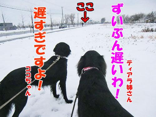 チャンスとティアラ+ココ-20121127-2-500.jpg