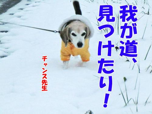チャンスとティアラ+ココ-20121127-3-500.jpg