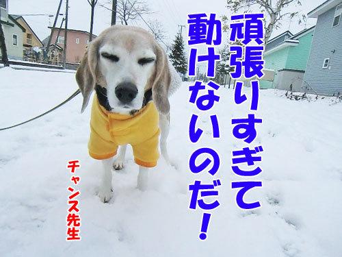 チャンスとティアラ+ココ-20121127-5-500.jpg